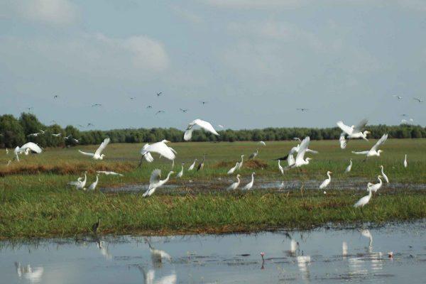 Wetland Dồng cỏ ở Tràm Chim