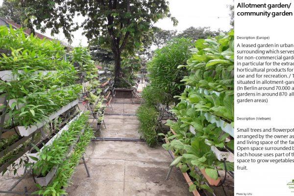 Allotment garden/ community garden